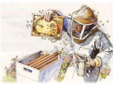Bee Keeping For Beginners