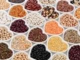 Exploring Beans & Other Legumes - KVCC, Hinckley