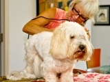 Dog Grooming - Lesson 2, Clipping & Scissoring