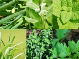 Preserving Herbs-Orono
