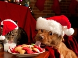 Holiday Preparedness Guide for Dog Owners