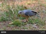 Birding by Habitat