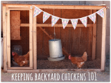 Original source: http://theantidotelife.com/wp-content/uploads/2013/07/Keeping-Backyard-Chickens-101.png