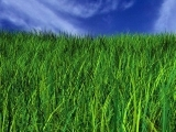 Original source: https://8goesgreen.files.wordpress.com/2010/04/green-graas-blue-sky.jpg