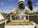Original source: http://cdn3.factorialist.com/wp-content/uploads/2015/10/Factorialist_-Beekeeping-copy.png