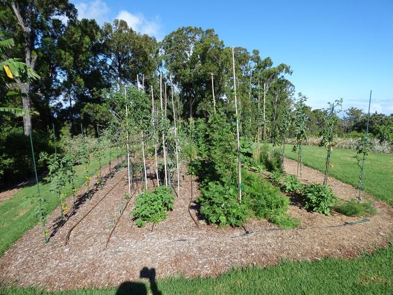 Original source: https://upload.wikimedia.org/wikipedia/commons/thumb/d/d6/Starr-150809-0402-Solanum_lycopersicum-veggie_garden-Hawea_Pl_Olinda-Maui_%2824668333663%29.jpg/1280px-Starr-150809-0402-Solanum_lycopersicum-veggie_garden-Hawea_Pl_Olinda-Maui_%2824668333663%29.jp