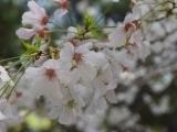 Spring Equinox/Summer Solstice - Woodbury