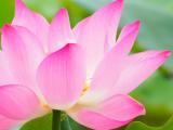 Abundant Yoga: Yoga for Abundant Bodies and Beginner Yogis (Session 2)