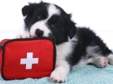 Pet First Aid & Disaster Response