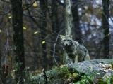 Wildlife and Nightlife of Scarborough's Eastern Trail