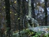 Wildlife & Nightlife of Scarborough's Eastern Trail - postponed