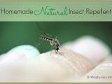 Make & Take Natural Bug Sprays & more