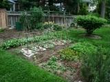 Plan, Garden, Cook, Eat - Starting the Garden from Scratch