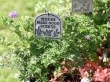 401S20 Herbs