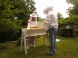 Natural Beekeeping Using Top Bar Hives - A Weekend Intensive