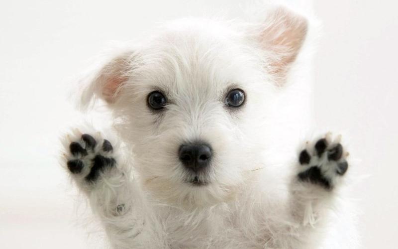 Original source: http://blogs-images.forbes.com/kristintablang/files/2016/02/Uber-Puppies.jpg