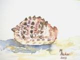 Painting Sand and Seashells