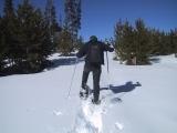 Make Ojibwa or Bear Paw Snowshoes