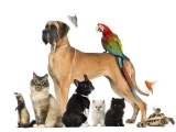 Original source: http://womenpla.net/wp-content/uploads/2016/01/PEts-India-Cover.jpg