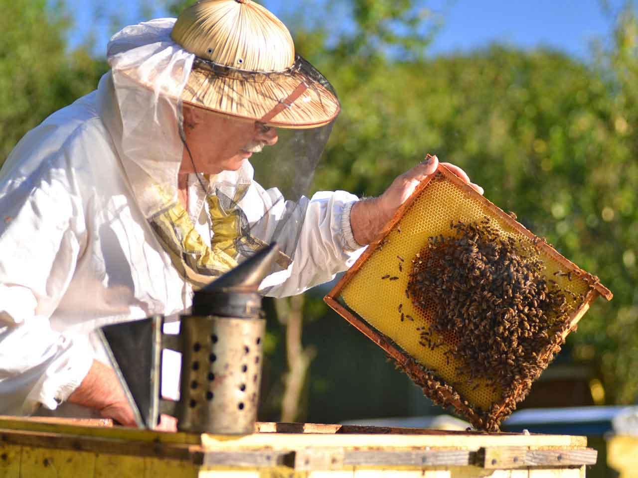 Bee Keeping for Beginners Messalonskee W19