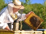 Bee Keeping for Beginners Messalonskee W19