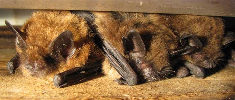 Night Hike & Bats!