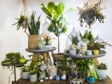 404F19 Success With Houseplants