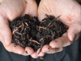 Worm Composting for Beginners F17
