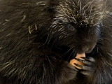 Live Animal Show: Predators