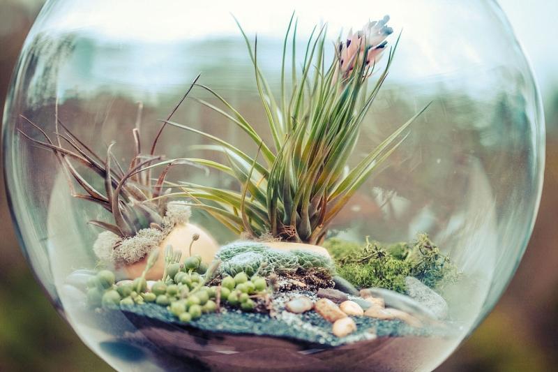 Original source: https://upload.wikimedia.org/wikipedia/commons/thumb/d/d0/Terrarium_bowl.jpg/1280px-Terrarium_bowl.jpg