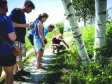Wild Edibles Walking Tour