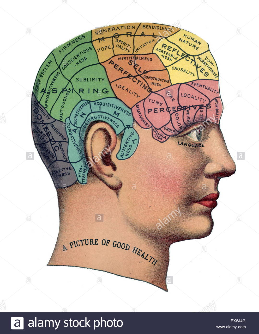 SAGE The Pseudoscience of Phrenology in Victorian Presque Isle