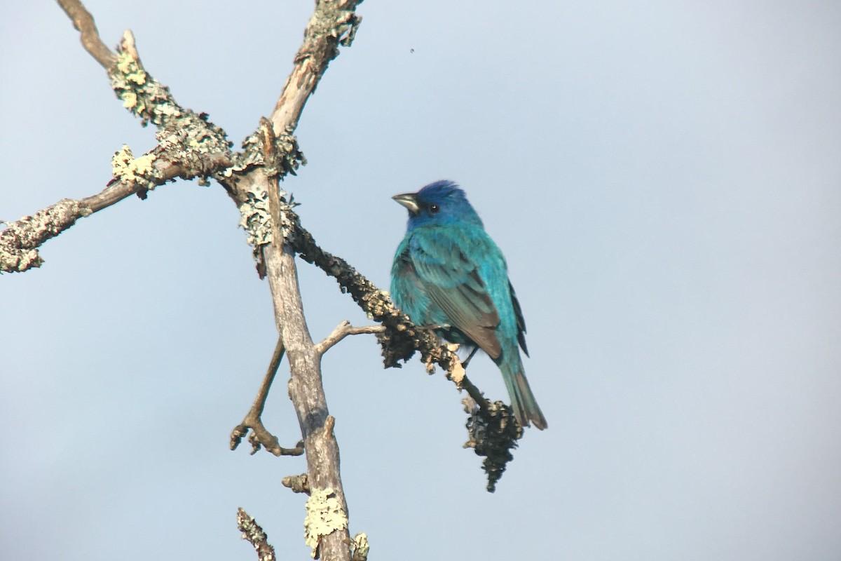L.L.Bean & Maine Audubon Birding Festival