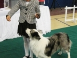 Canine Ownership/Obedience Training-Orono