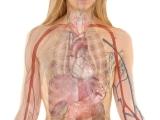Medical Terminology Online Program (WHN114-66)