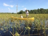 Get Ready for Wild Rice Harvesting