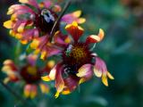 Native Plant Walk: Coffin Wildflower Reservation