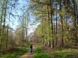 Forest Bathing (shinrin-yoku) Guided Walk
