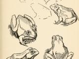 Drawing, Beginning
