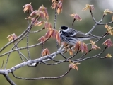Forestry for Maine Birds