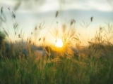 Home Funeral and Natural Burial Workshop
