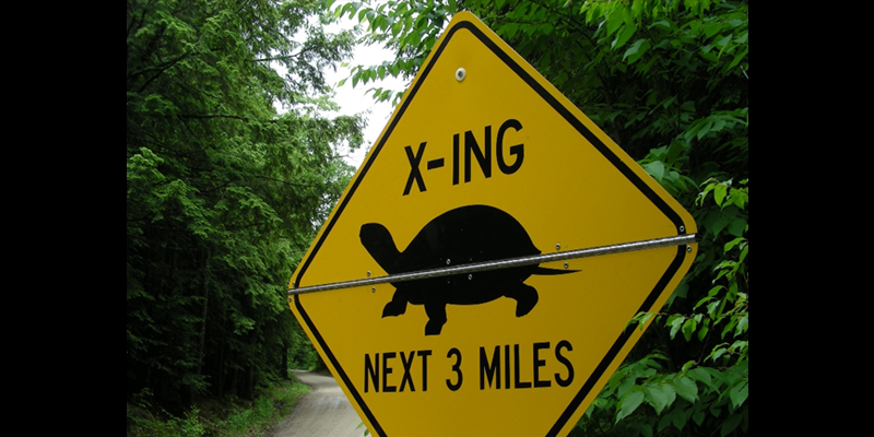 Turtle Roadkill Survey Training
