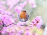 Birding Basics - Southbury