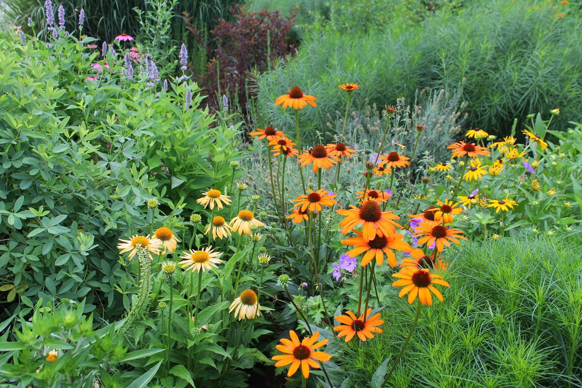 Milk Jug Pollinator Planter & Seed Balls