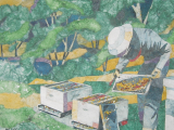 Beekeeping - Intermediate