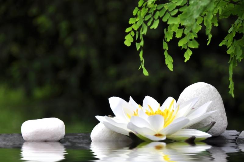 Original source: http://floridayogacademy.com/wp-content/uploads/2012/04/yoga-nature-image.jpg