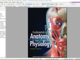 Human Anotomy & Physiology