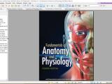 Human Anotomy & Physiology