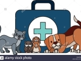 Cat & Dog First Aid/CPR
