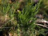 Wild Edible Plants Walk
